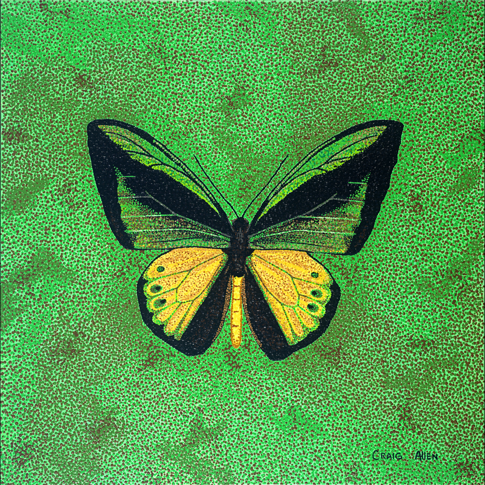 "Goliath Birdwing - 24"" x 24"" Acrylic on Canvas 2014"
