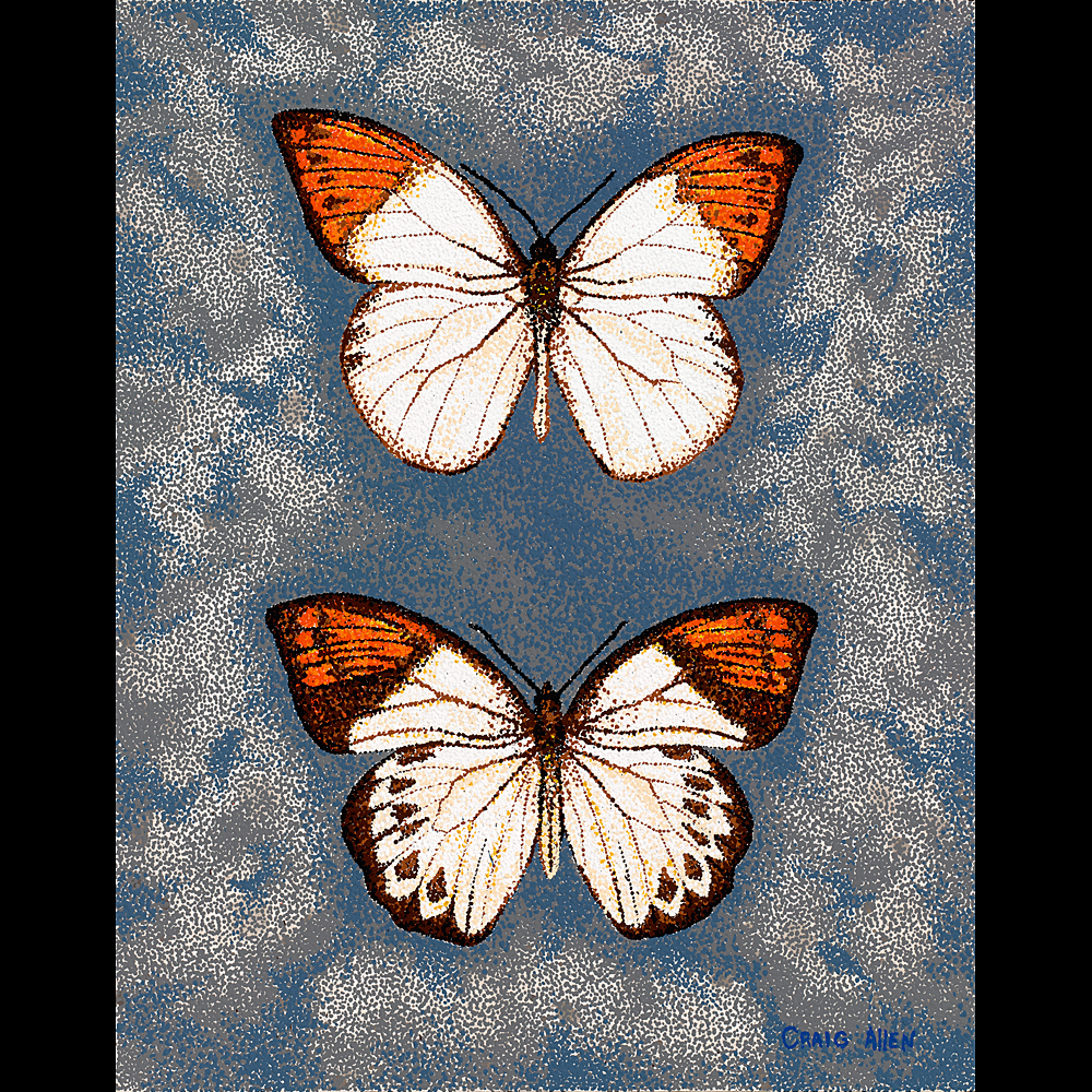 "Great Orange Tip - 24"" x 30"" Acrylic on Canvas 2012"