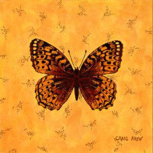 "Great Spangled Fritillary - 24"" x 24"" Acrylic on Canvas 2009"