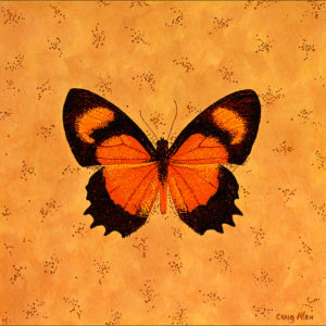 "Methone Cecilia - 24"" x 24"" Acrylic on Canvas 2009"