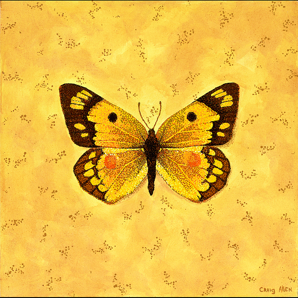 "Orange Sulphur - 24"" x 24"" Acrylic on Canvas 2009"