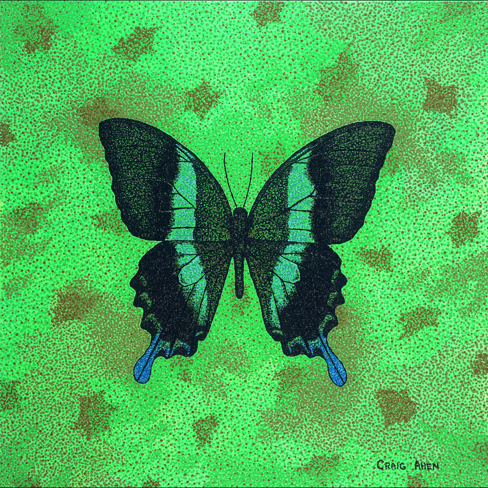 "Papilio Blumei - 24"" x 24"" Acrylic on Canvas 2014"