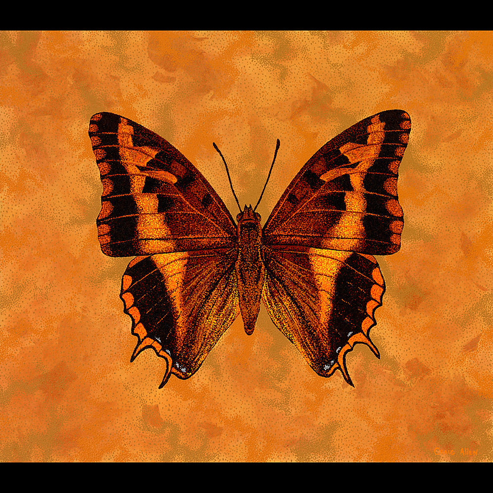 "Silver Barred Charaxes - 42"" x 48"" Acrylic on Canvas 2009"