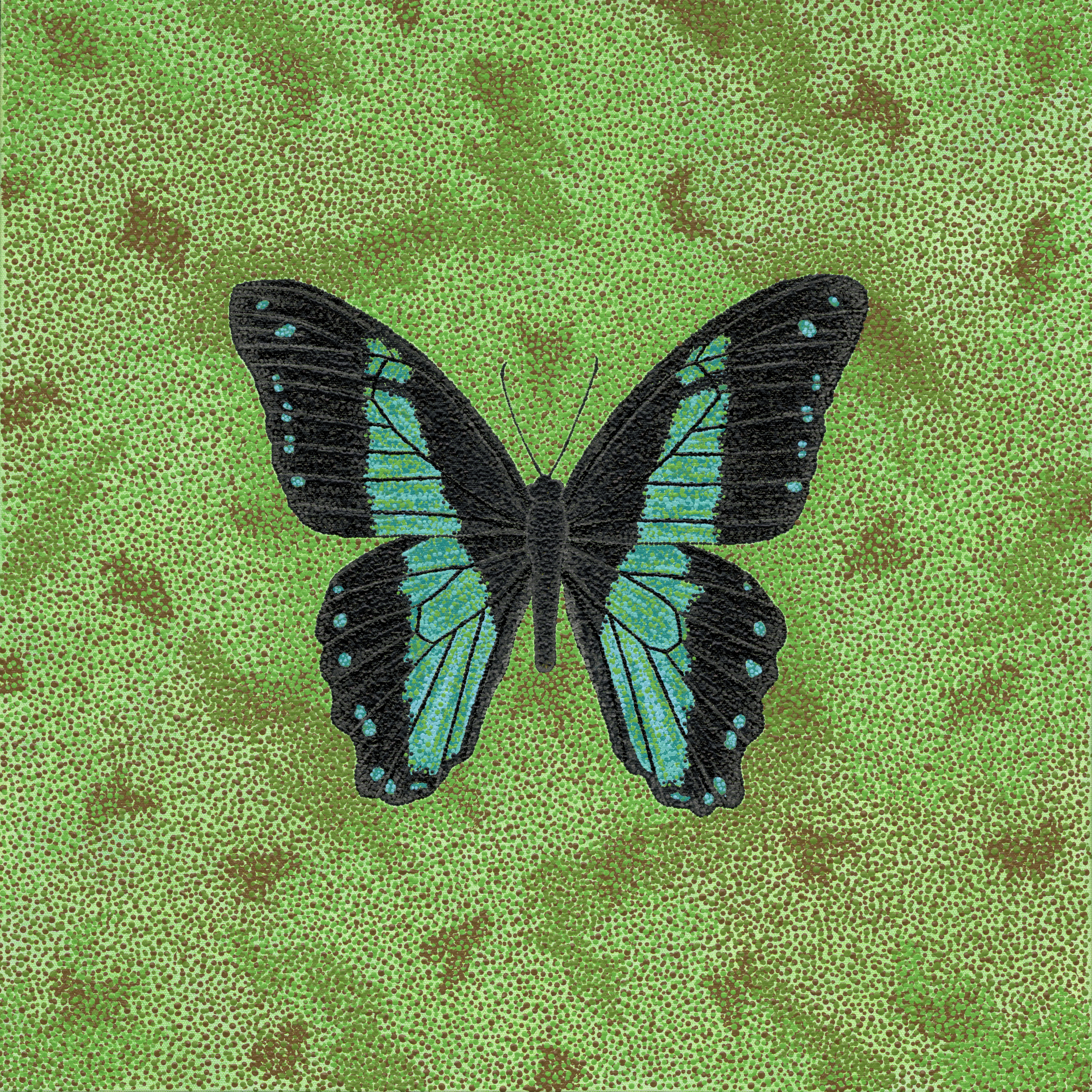 """Butterfly; Papilio Bromius - 24"""" x 24"""" Acrylic on Canvas"""