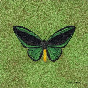 "Butterfly; Posiedon Butterfly - 24"" x 24"" Acrylic on Canvas"