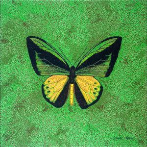 "Goliath Birdwing - 24"" x 24"" Acrylic on Canvas 2014"