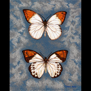 "Great Orange Tip - 24"" x 30"" Acrylic on Canvas 2012"
