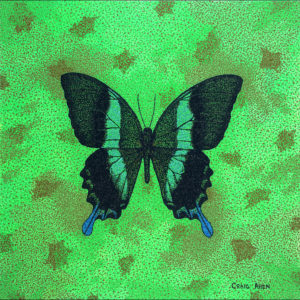 "Papilio Blumei - 24"" x 24"" Acrylic on Canvas 2014"