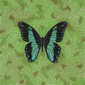 "Butterfly; Papilio Bromius - 24"" x 24"" Acrylic on Canvas"